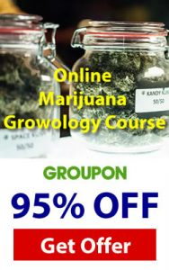 marijuna cannabis-course